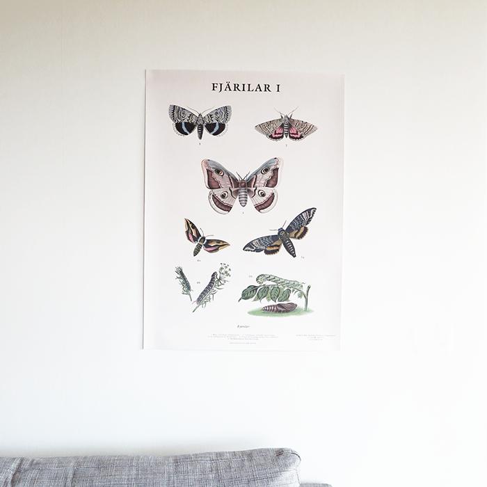 Skolplansch Fjärilar