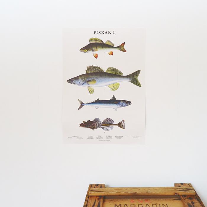Skolplansch Fiskar