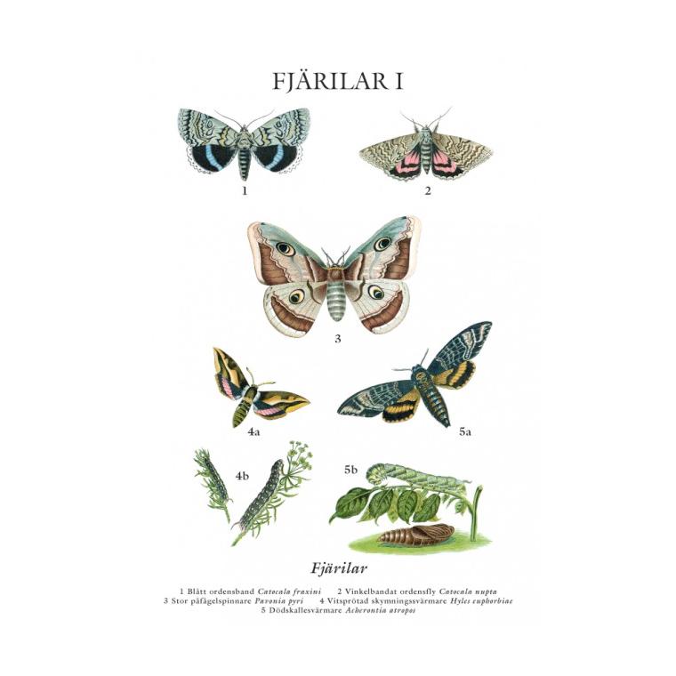 Skolplanscher nytryck vykort A5 Fjärilar