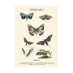 Skolplansch i nytryck med fjärilar