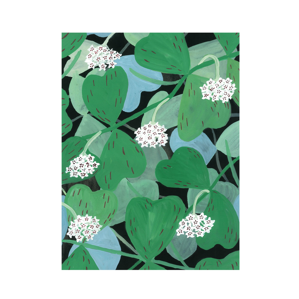 Poster Flora hoya av Linda Jäderberg